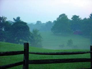 Misty green field